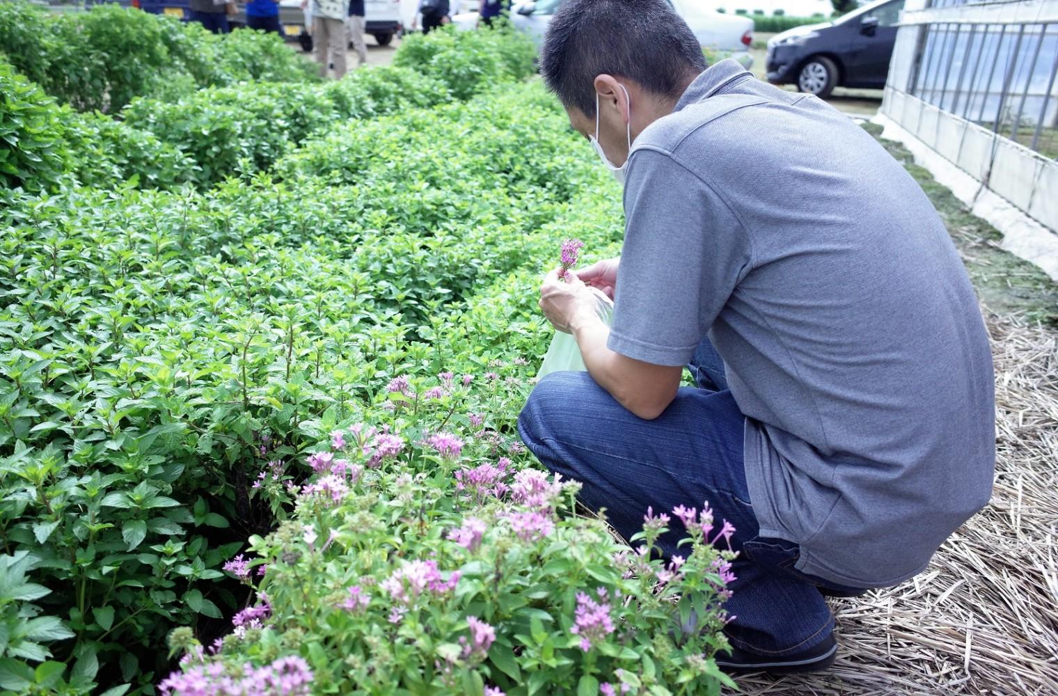 エディブルフラワー収穫体験