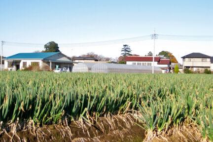 馬場ファミリー農園