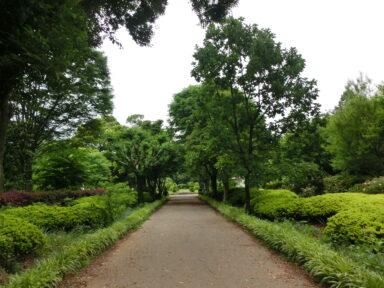 緑の王国 (2)