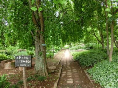緑の王国 (4)